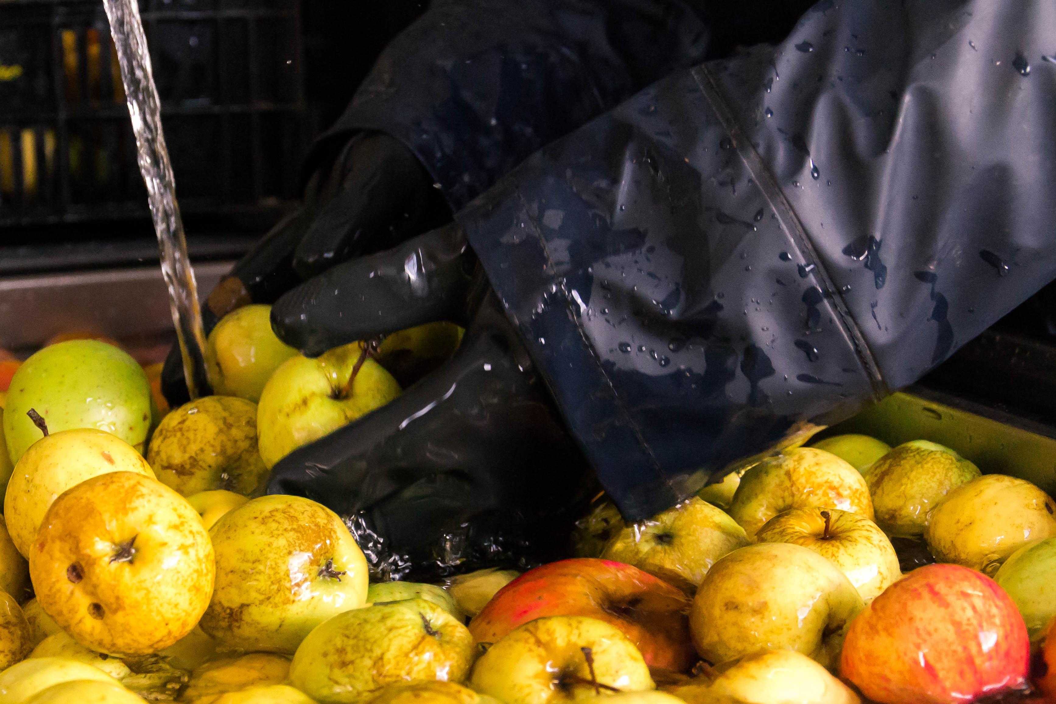 Vengono lavate le mele